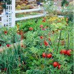 Povestea gradinii cu legume